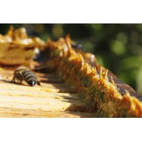 Propolis extract (Propowei)
