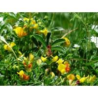 Fenegriek extract  (Hoornklaver/Trigonella foenum-graecum)