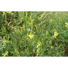 Akkerhoningklaver tinctuur Kruidenweide 100ml (Melilotus officinalis)