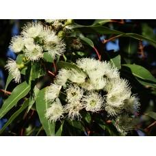 Eucalyptus etherische olie Kruidenweide 100ml