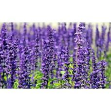 Lavendel etherische olie Kruidenweide 100ml