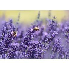 Lavendel etherische olie Kruidenweide 30ml